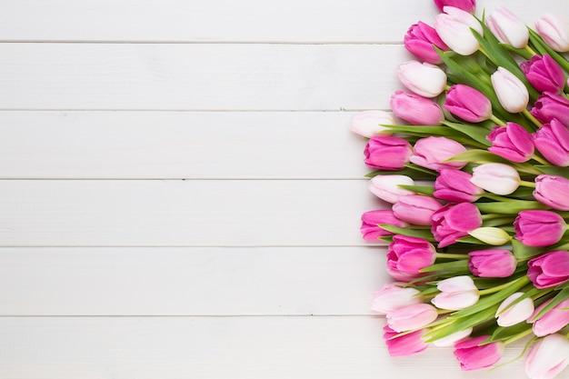 Розовый тюльпан на белом фоне.