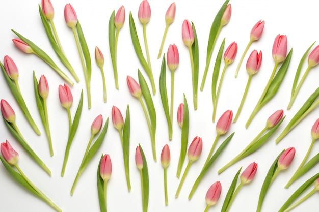 白bacjkgroundにピンクのチューリップパターン