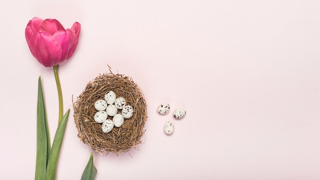 Pink tulip with quail eggs in nest