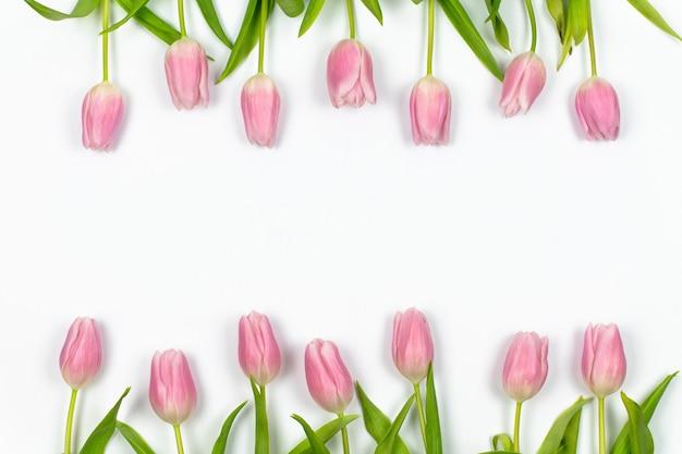 ピンクのチューリップは、白い背景の春の花のフレームの上下に一列に配置されています