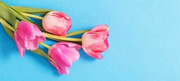 핑크 튤립 배경
