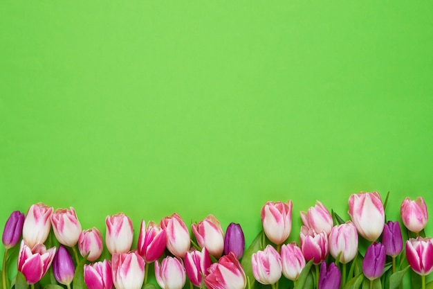 Pink tulips border on green background. top view, copy space.