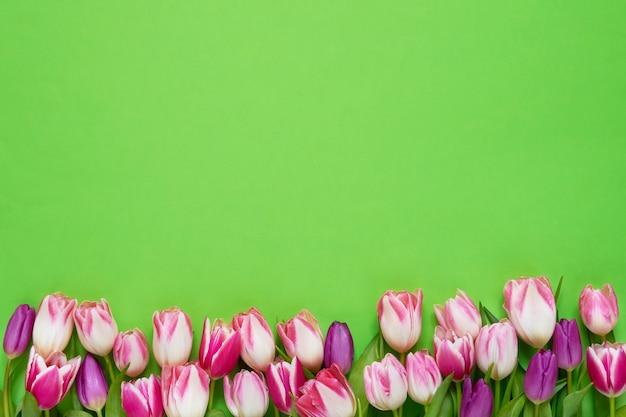 Розовые тюльпаны граничат на зеленом фоне. вид сверху, копия пространства.