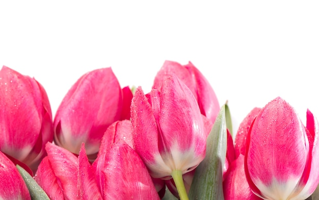 白い背景に分離されたピンクのチューリップの花束。