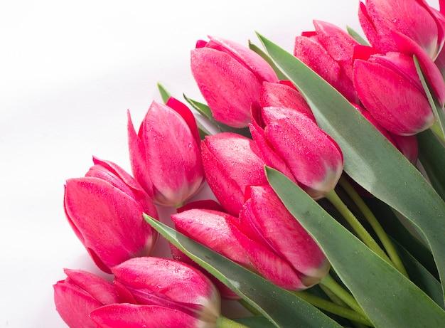 핑크 튤립 꽃다발 흰색 표면에 고립입니다.