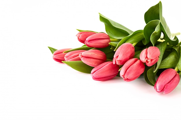 Pink tulips bouquet on white background.