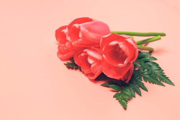 Pink tulips on a coral pink background. spring flower arrangement