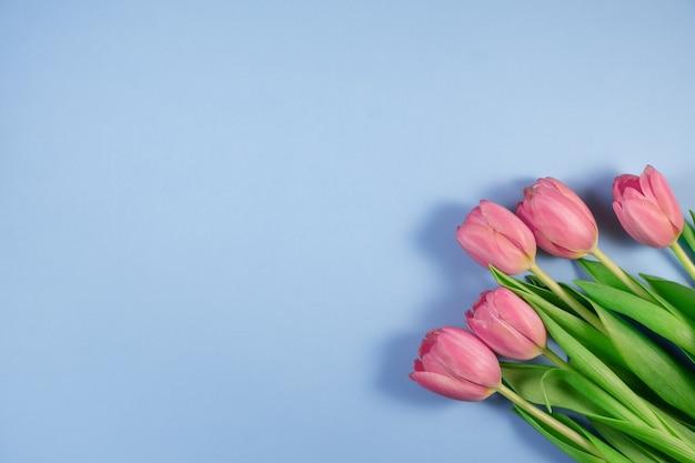 Розовые тюльпаны цветы на синем фоне. весенние цветы тюльпаны. карта на день матери, 8 марта, счастливой пасхи, дня святого валентина, дня рождения. открытка. плоская планировка, вид сверху, копирование пространства для текста