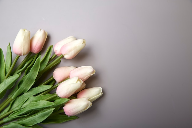Pink tulips for international women's day