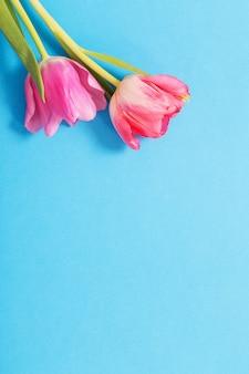 블루 종이 바탕에 핑크 튤립
