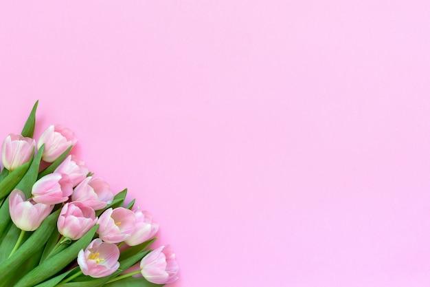 Розовые тюльпаны на розовом фоне. копирование пространства, вид сверху.