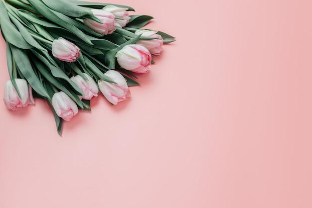 Розовые тюльпаны на розовом фоне, женский день и поздравительная открытка ко дню матери