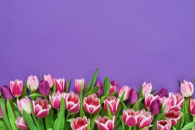 Розовые тюльпаны на фиолетовом столе. вид сверху, копия пространства.