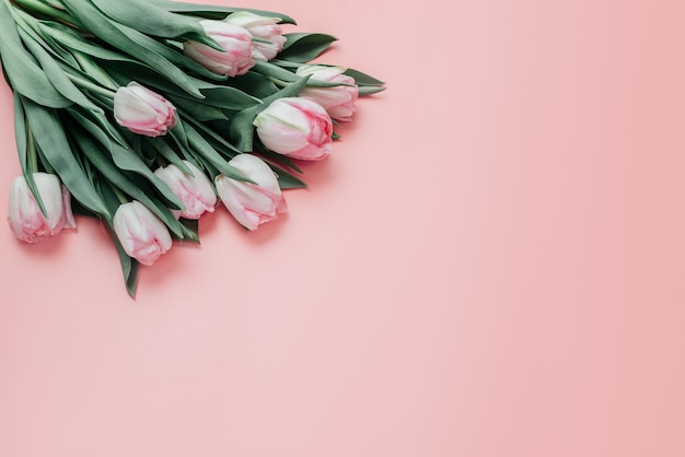 Pink tulips on pink background, women's day and mother's day greeting card