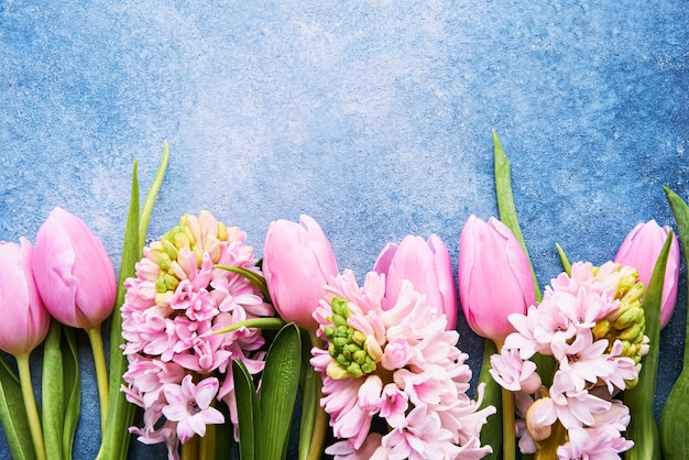 Pink tulips and pink hyacinths flowers on a bright blue wall. top view, copy space for text
