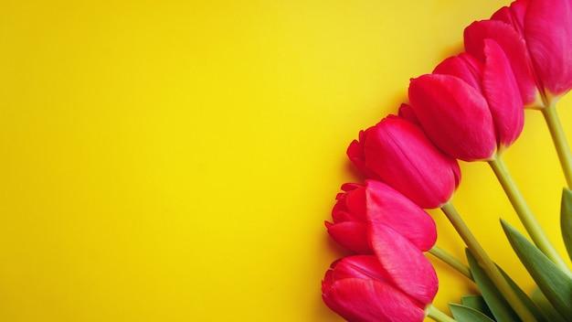 Pink tulips on yellow