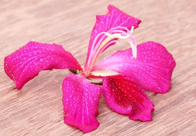 木の表面にピンクの斑入りまたはカンチョンの花