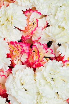 Pink and white carnation flowers background