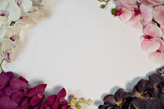 Pink white purple violet orchid flowers on white background  copy space