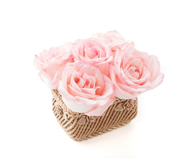 Pink and white rose
