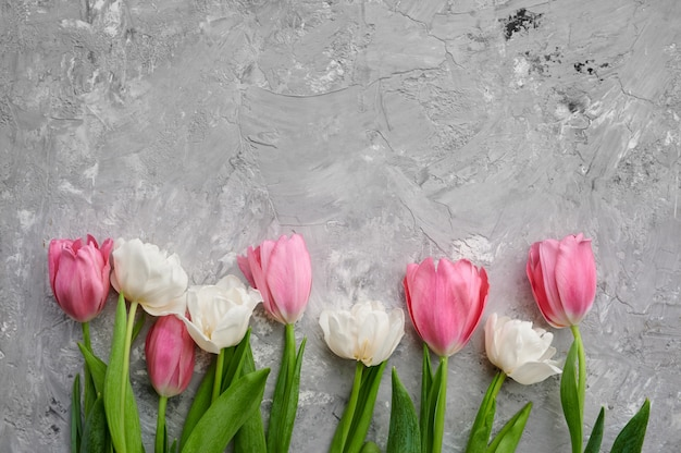 Pink and white tulips on grey concrete background
