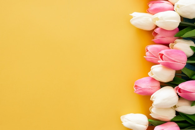 Pink and white tulips on yellow background