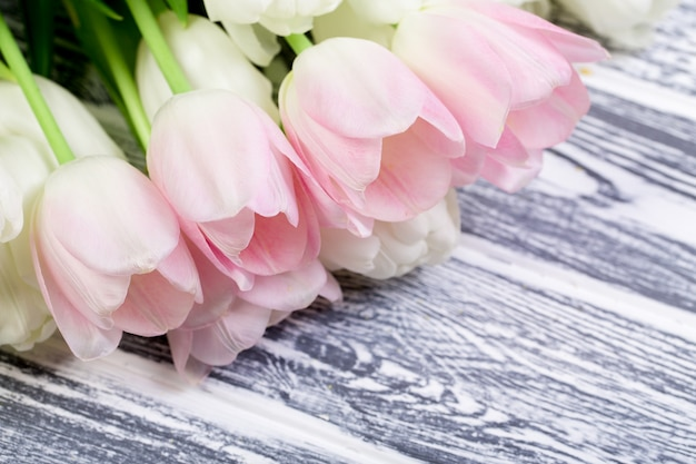 Pink and white very tender tulips on white, gray wooden backgrou