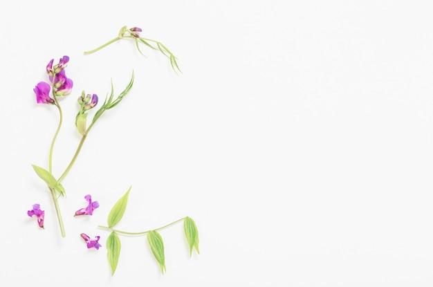 Розовые полевые цветы на фоне белой бумаги