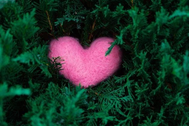 緑のジュニパーまたはトゥヤの枝に横たわるピンクのウールのハートバレンタインデーweddingengagement