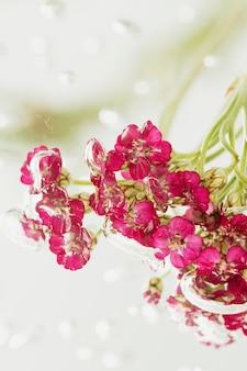 물에 핑크 야로우 꽃