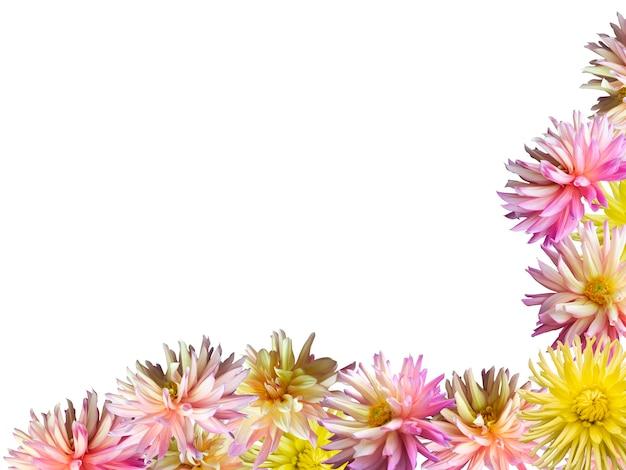 ピンクイエローのダリアの花がコーナーフレームを設定します(白で隔離)