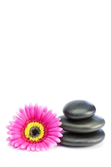 Pink and yellow flower touching piled up pebbles