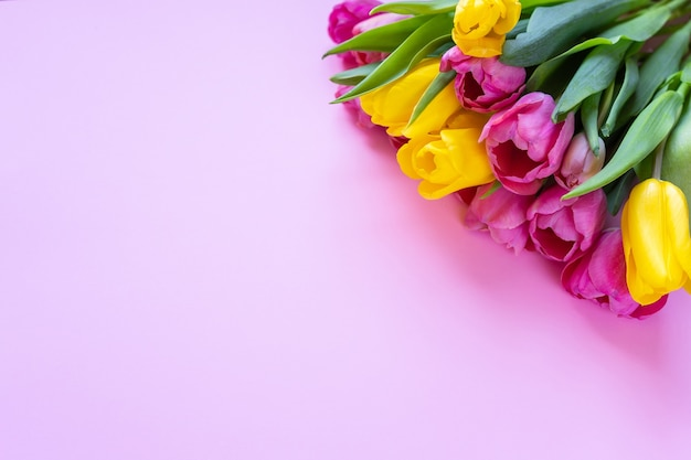 Pink and yellow tulips on a pink background.