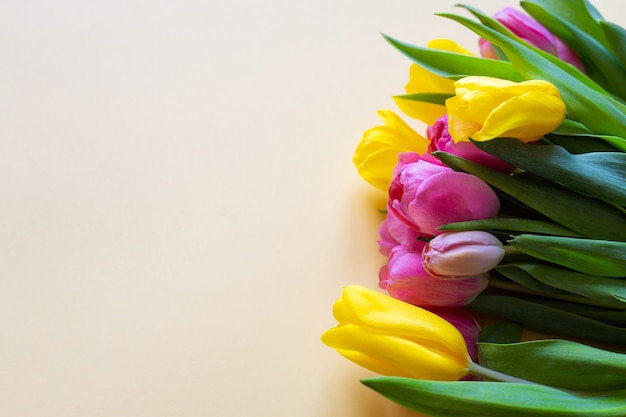 Pink and yellow tulips on a yellow background