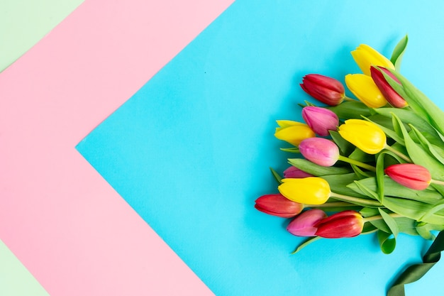 Pink, yellow and violet tulips flowers bouquet over plain blue and pink background with copy space