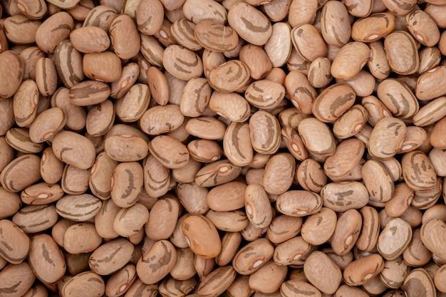 Pinto bean, phaseolus vulgaris 종의 다양한 일반적인 콩