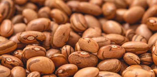 Пегая фасоль крупным планом фото для сельского хозяйства и пищевой тематики