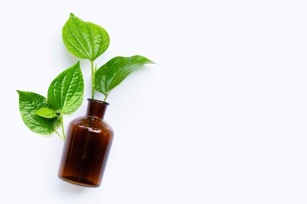 Листовой куст piper sarmentosum с изолированной бутылкой эфирного масла