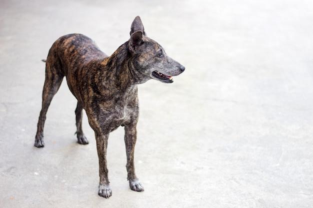 타이거 컬러로 길 잃은 강아지의 동정 얼굴