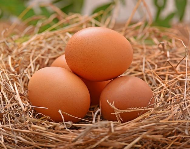건초 더미 나무 바닥에 계란을 놓습니다.