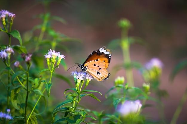 자연 녹색 배경에서 봄 동안 줄기에 자리 잡고 일반 호랑이 나비