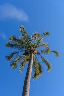 Plam on blue sky background