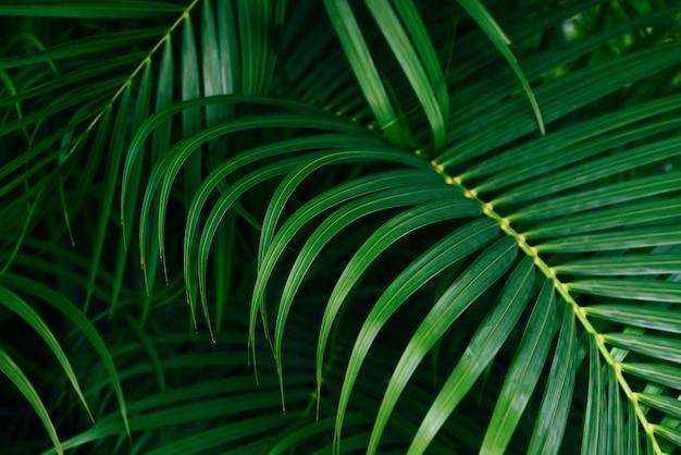 Листья сливы в тропическом лесу