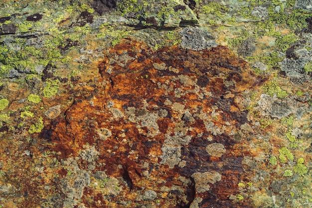 マクロで色とりどりの岩の平面。美しい岩の表面をクローズアップ。カラフルなテクスチャ石。コケや地衣類と高地の岩の驚くほど詳細な背景。山の自然な風合い。