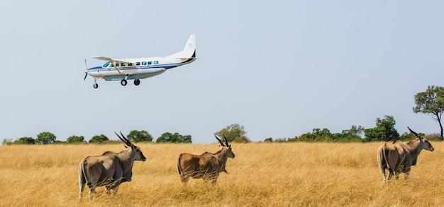 観光客と飛行機がサファリのサバンナに着陸
