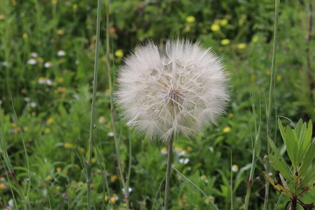 夏の季節の夏の背景の日光の下で植物と花