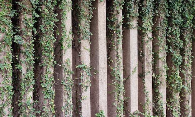 식물과 돌담 울타리