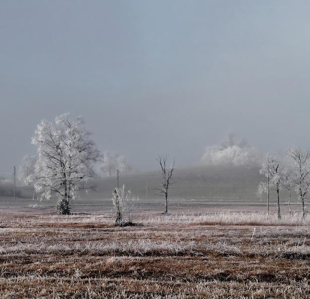 日中の植物と樹木畑