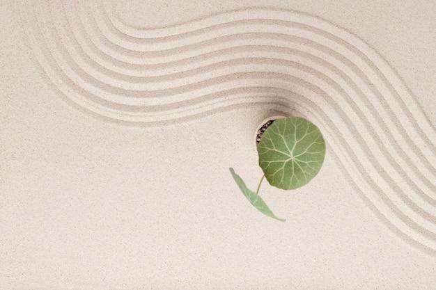 Pianta sullo sfondo della sabbia della spiaggia nel concetto di salute e benessere