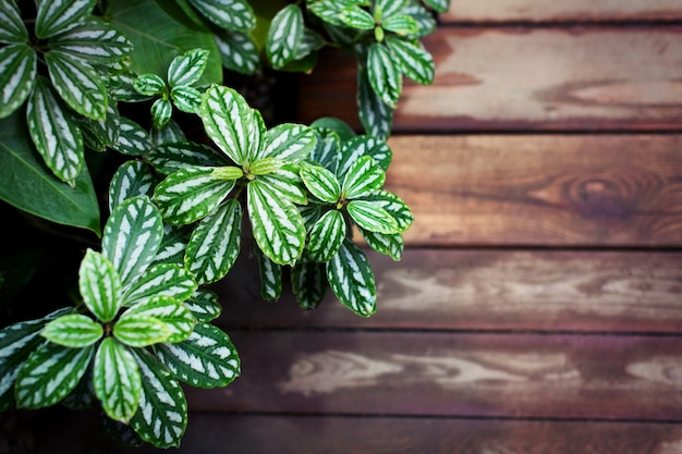 Plant border with leaves on wooden background